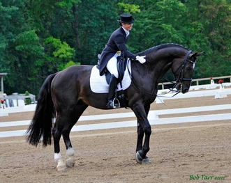 All levels dressage teaching with Elena (Sokolovskaia) Golubitsky - USDF Silver & Gold Medalist